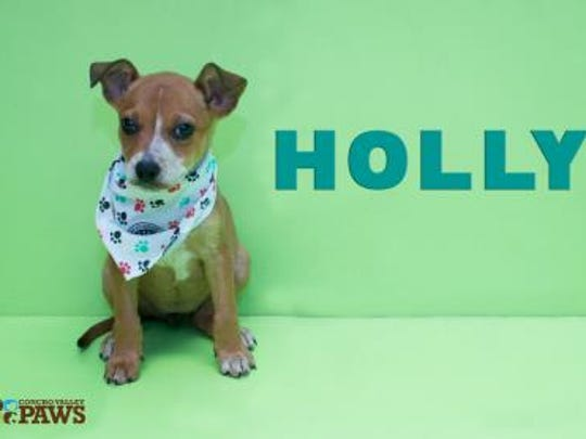 Holly, a Heeler mix, needs a home.
