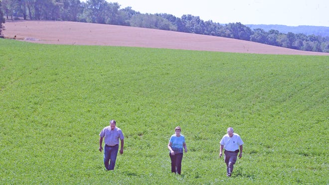 Special Projects Coordinator at the OSU Wooster Campus Brian Gwin, Pathways to Prosperity Wayne County liaison Ann Obrecht and Farmers National Bank Senior Vice President Tom Stocksdale stand in an alfalfa field with a wheat field behind it and a large stand of trees in the background showing the diversity of agriculture production on the Obrecht farm on state Route 3 south of Wooster. Obrecht spearheaded the effort to form the Ag Success Team in 2003, and Gwin and Stocksdale are a part of the agriculture group.