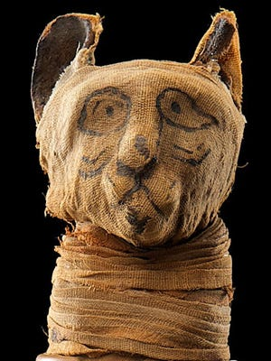 Dating back to the early Roman period, this cat mummy shows how Egyptian cats were ritually embalmed in a lengthy process using salt and various resins.