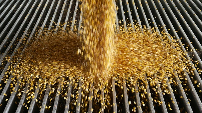 Corn is delivered to the Green Plains ethanol plant in Shenandoah on Jan. 6.