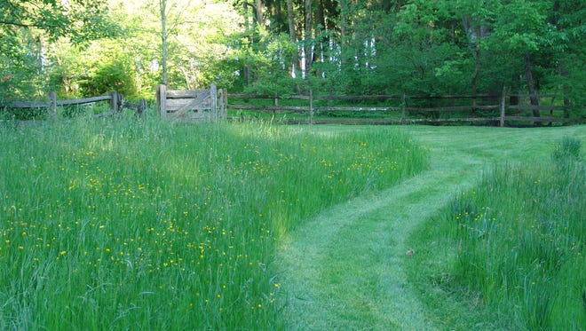 A mowed path shows how a family is allowing their back yard to become a meadow.
