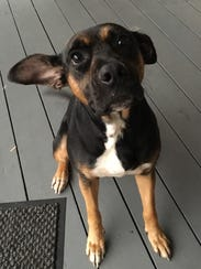 Daisy is a 2-year-old, 49-pound, spayed-female plot