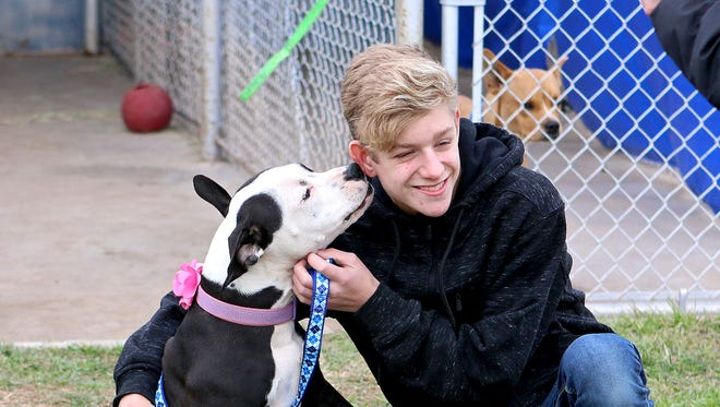 Zac Cox receives kisses from Merci, a dog he and his family adopted at the during a multiple-rescue adoption event, Saturday afternoon at Emily's Legacy Rescue kennel facility, 1400 Rathgaber Rd.