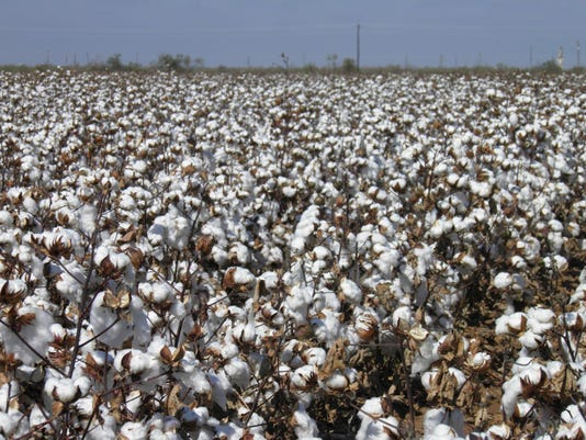 0315_safe_agday_cottonfield.JPG