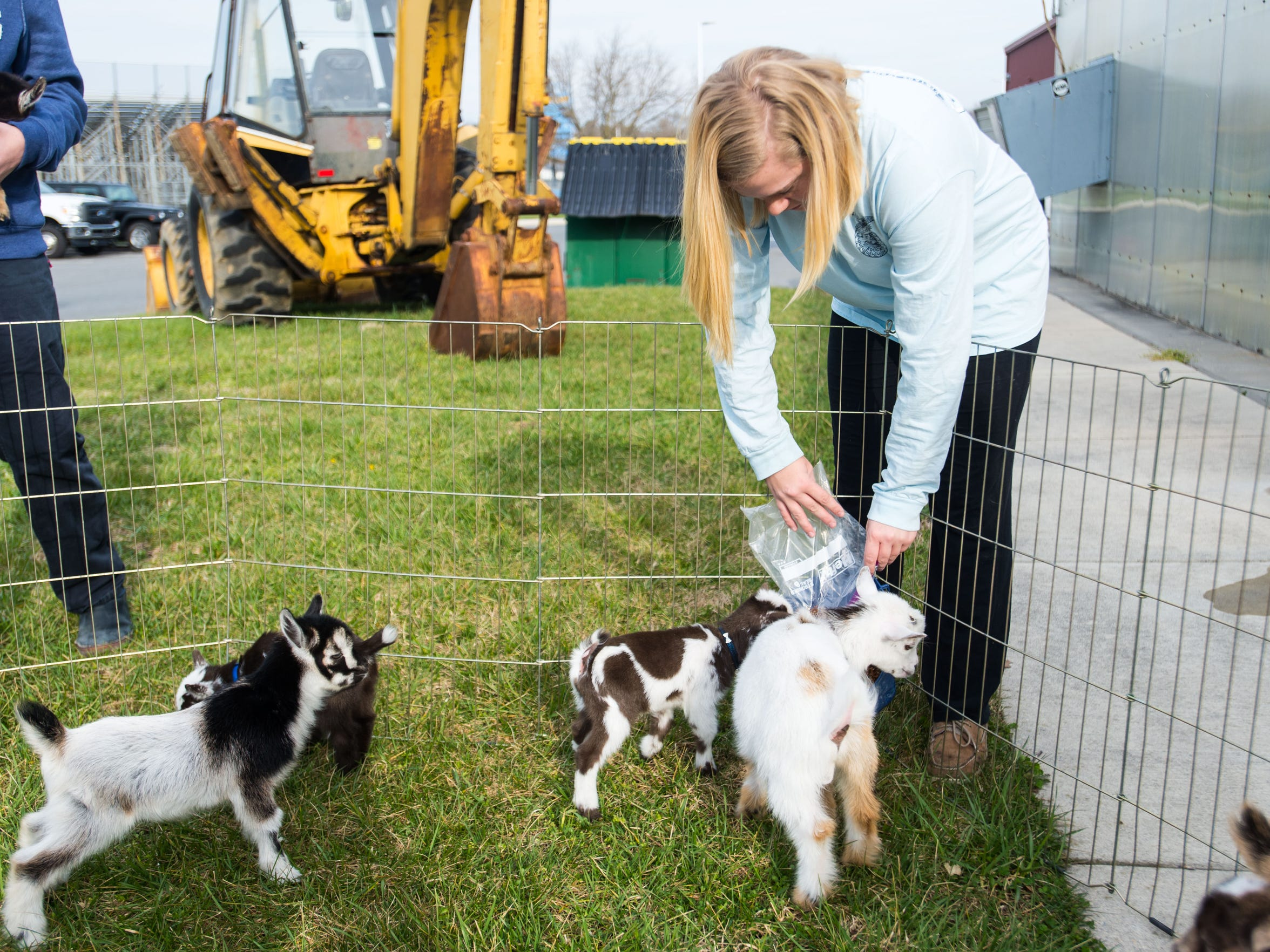 Cape Henlopen senior Shannon McCall feeds baby goats at Cape Henlopen High School on Tuesday, March 22.