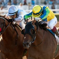 Usa Today Sports Horse Racing