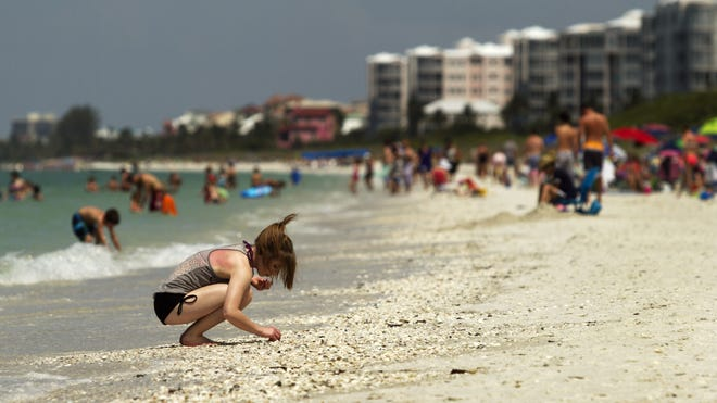 Amber Miller, of Wheatland, Wis., searches for seashells at Barefoot Beach in North Naples.  Wheatland, Wisconsin searches for seashells at Barefoot Beach on Tuesday, April 10, 2012, in North Naples.
