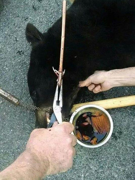arrow_out_of_bear.jpg