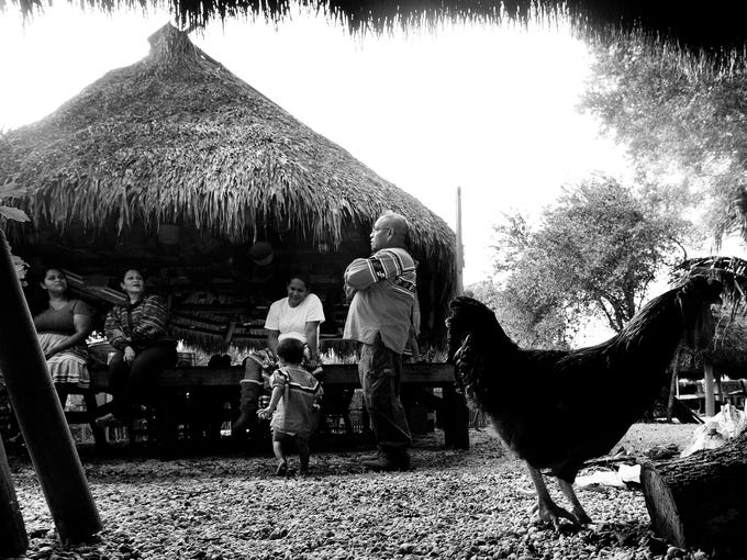 LeRoy Osceola and his family spend an afternoon together at their clan camp along the Tamiami Trail.   Although there are several modern structures, they still use traditional chickees like this daily.    Osceola, 56, leads a traditional life in a Miccosukee camp off of the Tamiami Trail just inside Big Cypress National Preserve.  He is part of four generations of independent natives.  Although he does not receive tribal or reservation assistance or gambling dividends, his wife, Cassandra is a member of the Miccosukee tribe and receives a dividend of more than $100.000.