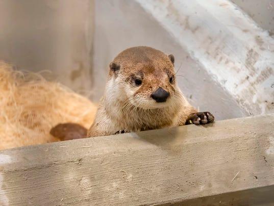Otter14p1