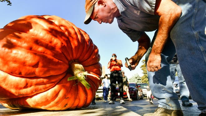 Jim Ackerman marks the largest of the pumpkins weighed at a past Morton Pumpkin Festival Pumpkin Weigh Off.