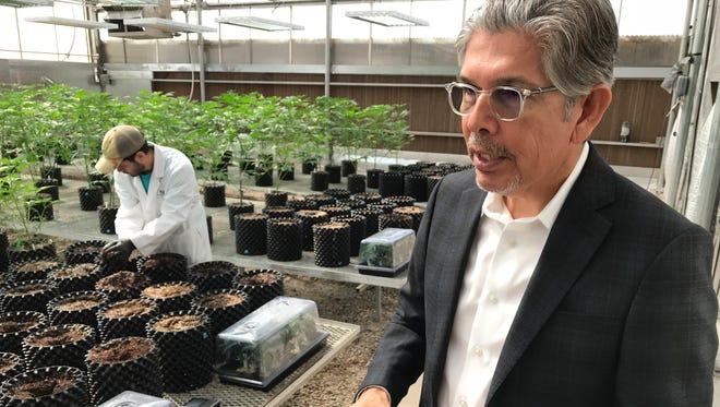 In this April 6, 2018 photo, Ultra Health president and chief executive officer Duke Rodriguez discusses the medical marijuana industry during a tour of the company's greenhouse in Bernalillo, N.M. Ultra Health on Thursday, April 19, 2018, announced the acquisition of farmland in southern New Mexico where it plans to build another cultivation facility that will include indoor and outdoor operations.