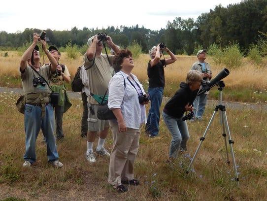 Minto birding