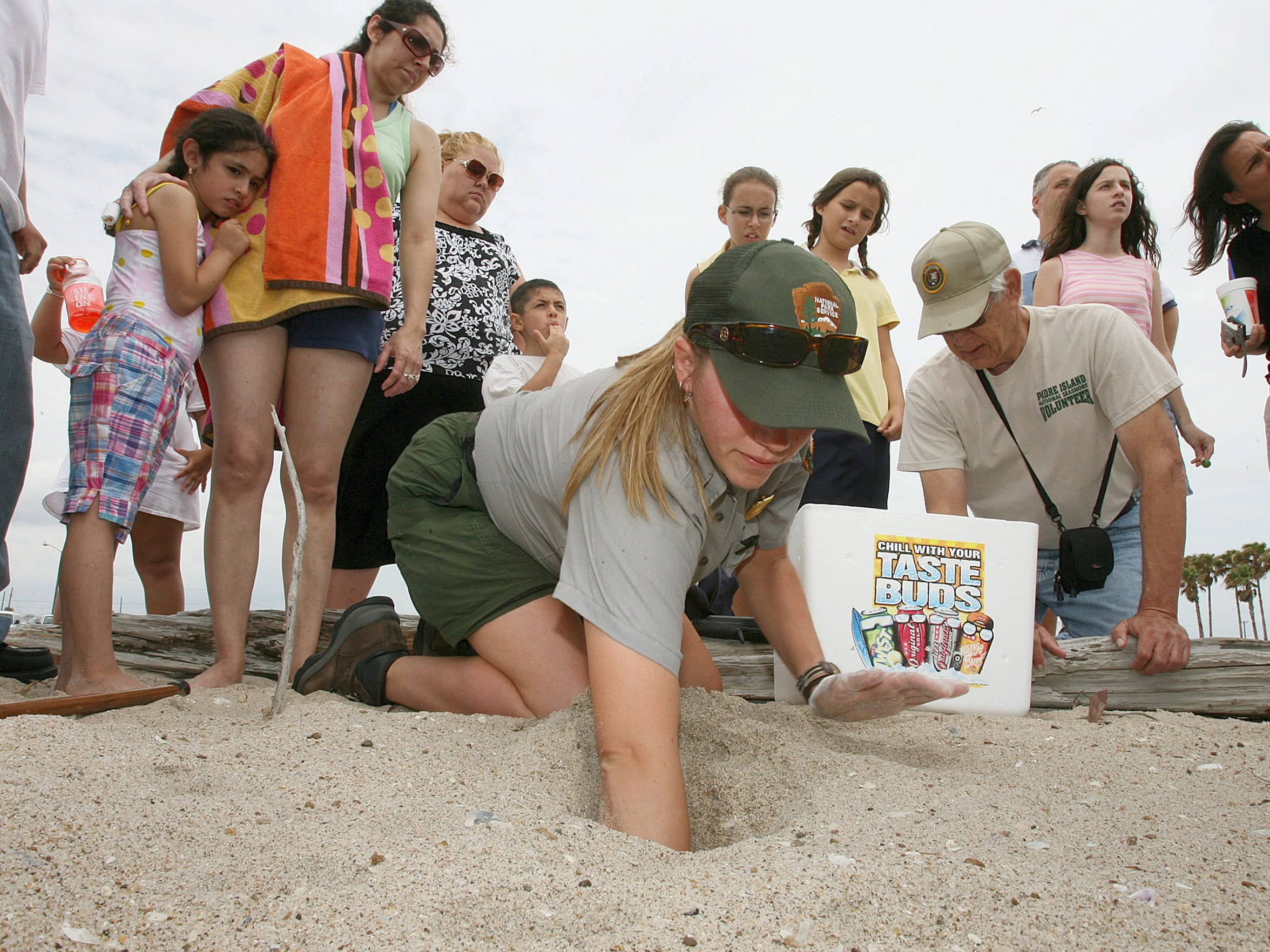 Beach goers on North Beach gather around to watch a turtle patroller on Padre Island National Seashore remove Kemp's ridley sea turtle eggs from a nest.