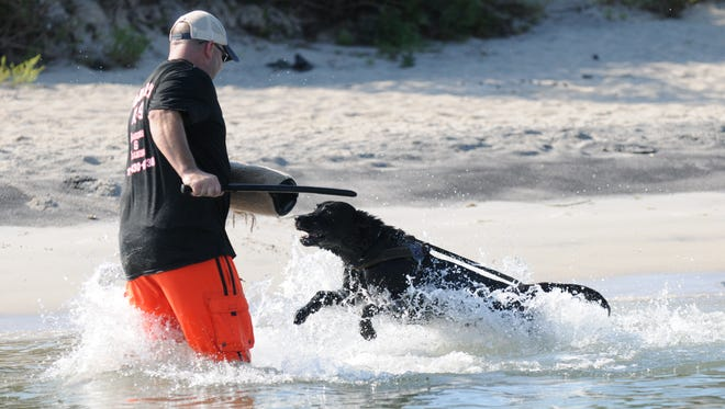 JC Richardson, Wicomico County k-9 handler/trainer, performs a water training drill with Police Service dog Goro on Monday, Aug. 16, 2016 near the Ocean City harbor.