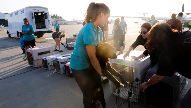 Victoria Teero holds Hunter before he is loaded onto an airplane bound for Calif. as part of Freekibble Flights to Freedom, a drive to clear space in local animal shelters for animals from areas of TX hit hard by Hurricane Harvey, Sep 5, 2017.