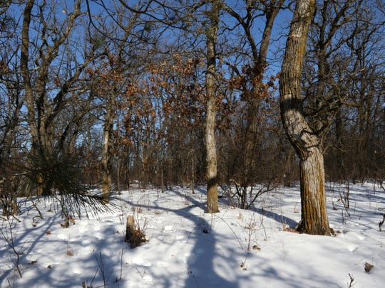 Janet Raasch's body was found by hunters in this wooded area near State 54 in rural Portage County on Nov. 17, 1984.