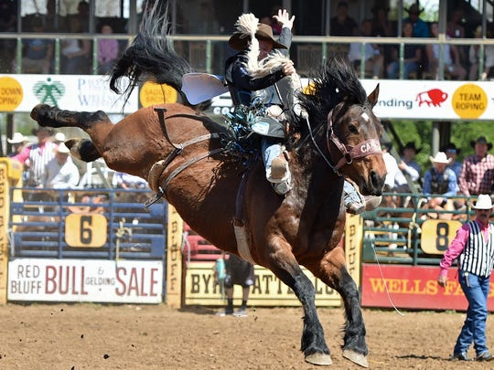 Zeke Thurston of Big Valley, Alberta, is the 2018 Red Bluff Round-Up saddle bronc riding champ.