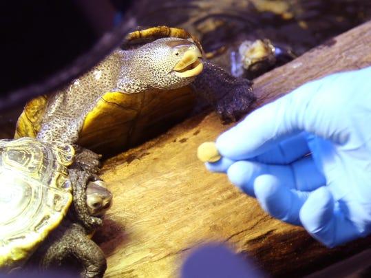 Turtle Deaths