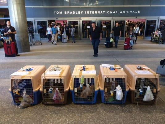 Pets-International Dog Rescue