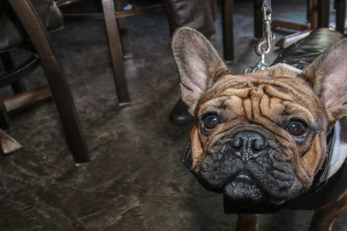 Old Hickory Whiskey Bar hosted Hooch for the Pooch