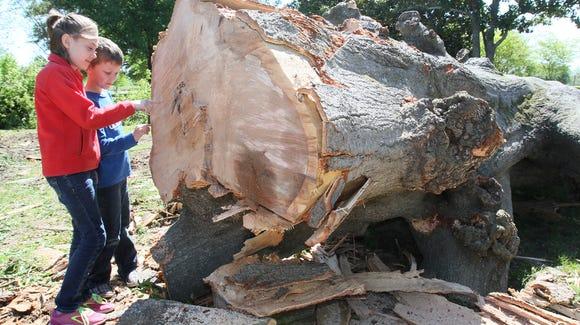MONBrd_04-16-2014_NewsStar_1_B003~~2014~04~15~IMG_Tree-emcintyre06__2__1_1_DC72MTHV_L400130727~IMG_Tree-emcintyre06__2__1_1_DC72MTHV