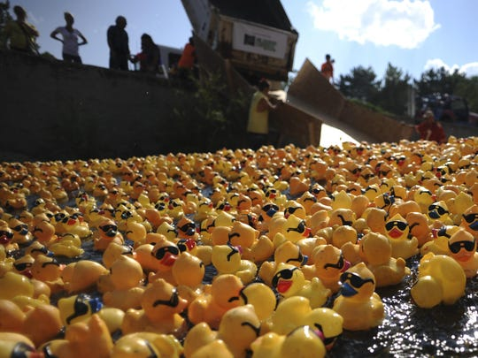 Thousands of rubber ducks float down the Truckee river during the Nevada Humane Society's Duck Race and Festival at Wingfield Park on Sunday, August 25, 2013.