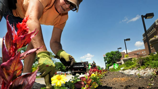The Flower Bed owner Pam Tetrick-Tadych plants a long row of flowers in front of the St. Cloud Hospital on Friday.