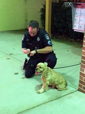 A Waynesboro police officer works a scene Tuesday night, Nov. 10, 2015.