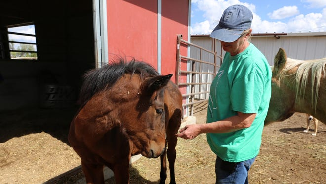 Founder Debbie Coburn pets Nova, an orphaned filly, Wednesday at Four Corners Equine Rescue.