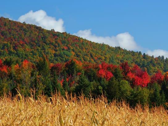 Goulet_Foliage_Corn_Field.jpg