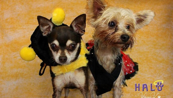 Zeke and Coco need to find a home together, please.