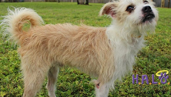 Looking for a little dog with a huge personality? Check me out.