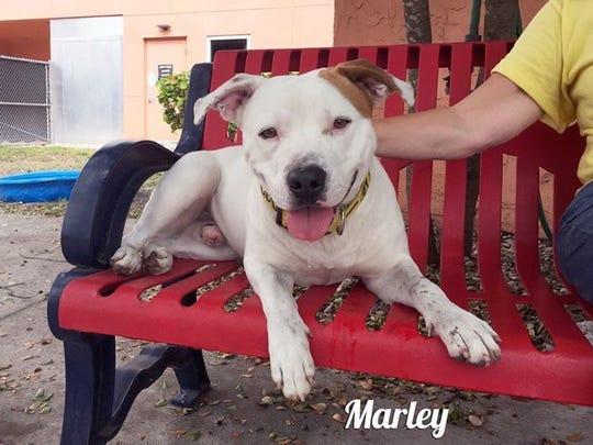 Marley ID#690876