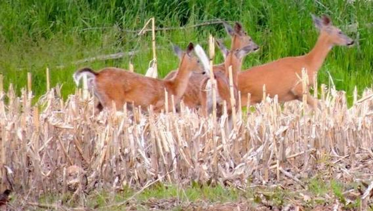 DNR wardens answer questions on deer hunting rules