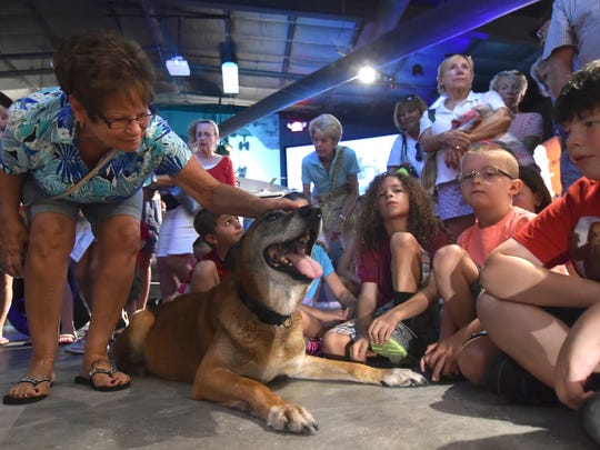 """I can't believe all the work he did, he's awesome, good for you Barry,"" said Sandy Sirois (left), of Fort Pierce, while meeting Barry, 12, the first multipurpose canine of Naval Special Warfare Group 2 (retired), during his visit at the National Navy UDT-SEAL Museum Thursday in Fort Pierce."