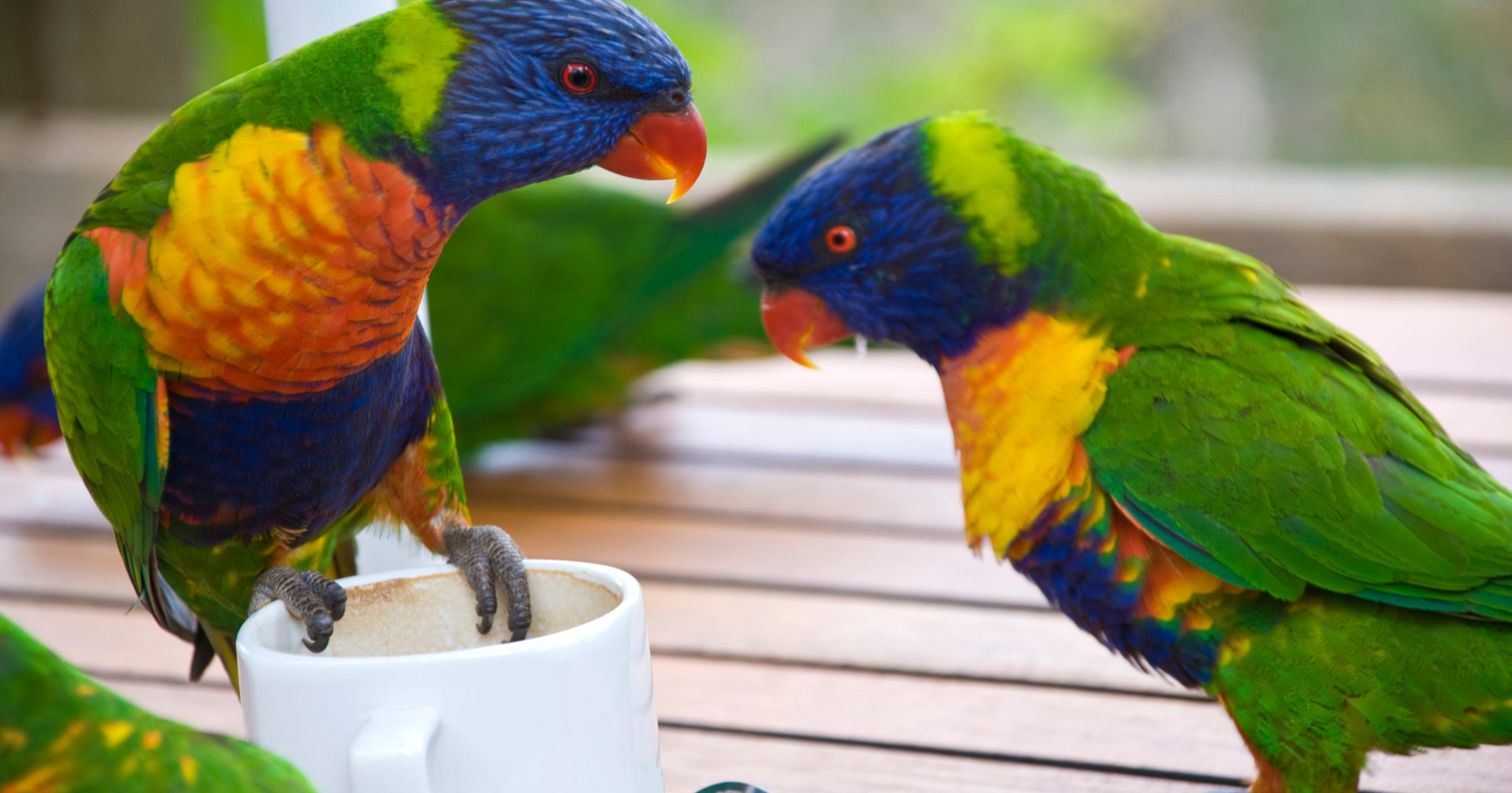 Police: Pa  woman blames coffee-drinking parrot for car crash