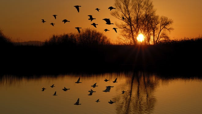 Necedah Wildlife Refuge will offer a photography session and migratory bird walk in November.