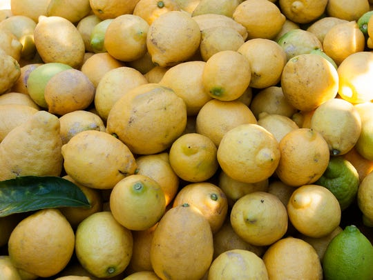 Lemons are harvested in the Limoneira orchard in Santa