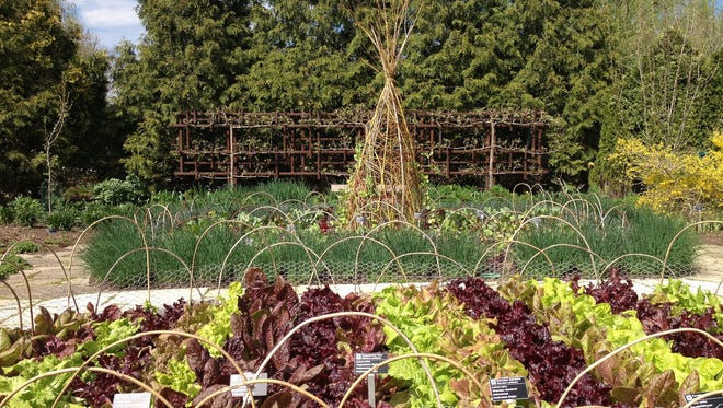 One of the tenants of permaculture is to put vegetables and other plants that need a lot of attention along pathways or other areas where you spend time so it's easy to take care of them.