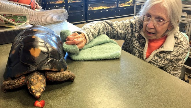 Mary Works polishes a turtles shell during her day trip to the Columbian Park Zoo.