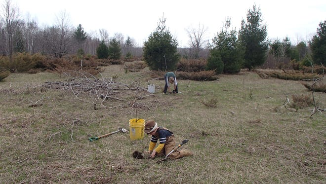 Planting trees in 2014 with the Forest Recovery Project.