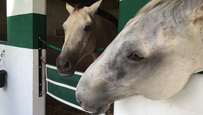 Left to right, Bub and Hobby, two of the therapy horses used in the Mending Fences rehabilitation program.