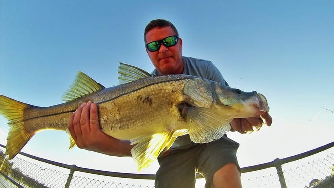 An overslot snook was caught and released Wednesday by Chris Sharp of Beachwalker guide service. Wednesday is the last day snook may be harvested in 2016.