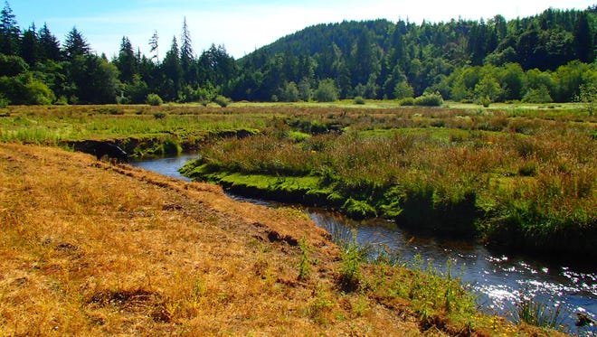 The Mason Conservation District will plant native vegetation along Gosnell Creek, a tributary of the salmon-bearing Mill Creek.