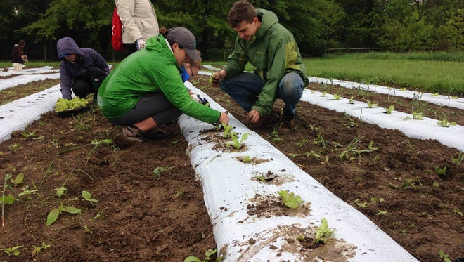 Down to Earth Food Co-op members planting and protecting crops during a farm shift.