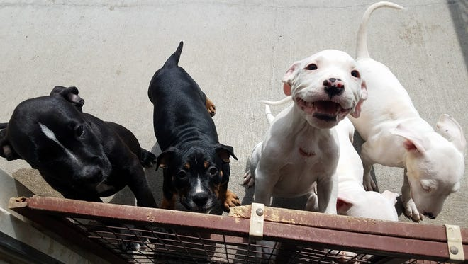 Richland County Humane Society took custody of five puppies Wednesday after a man reportedly cut for of their throats.