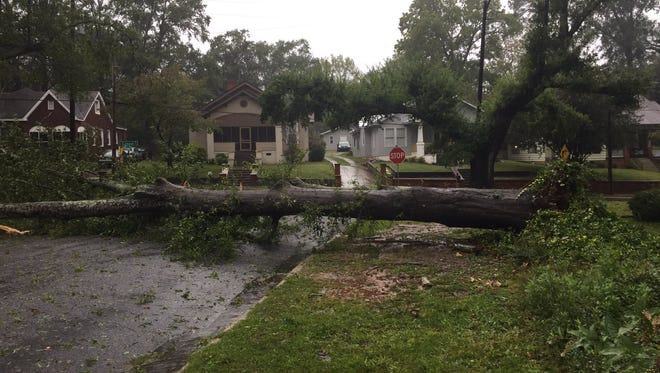 A tree uprooted by Hurricane Irma in September 2017 blocks Creswell Street in Anderson, South Carolina.