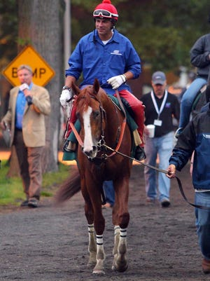 California Chrome takes a walk to get to the track at Belmont Park prior to a workout. The colt is trying to become the 12 horse to win racing's Triple Crown.