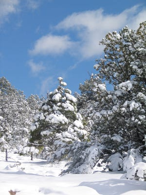 A snowy forest scene.